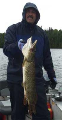 BIG Northern Pike with heavy Girth Fishing Canada Lodges