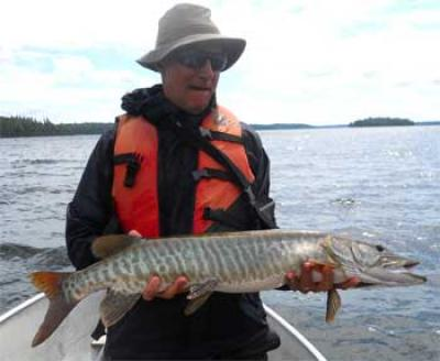 My First Muskie at 36-inches Fishing in Canada