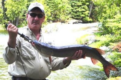 Twin Falls Muskie Fishing at Fireside Lodge Canada
