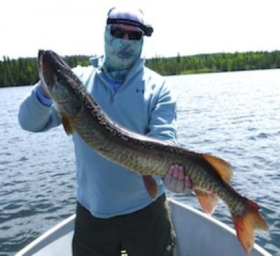 Nice BIG Musky caught at Fireside Lodge Canada