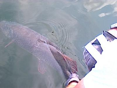 Fran Stack Release of Trophy Northern Pike at Fireside Lodge Canada