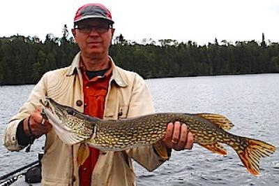 Many Northern Pike over 35-inches Fishing at Fireside Lodge in Canada
