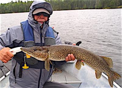 My First BIG Northern Pike Fishing at Fireside Lodge in Canada