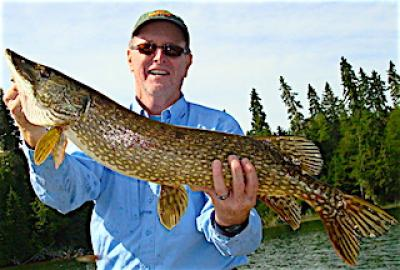 BIG FAT Northern Pike are the Norm Fishing at Fireside Lodge in Canada