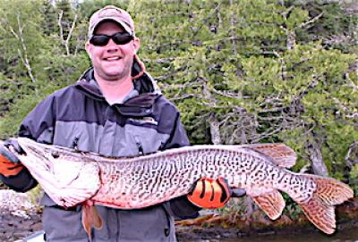 Monster Trophy Tiger Muskie Fishing at Fireside Lodge in Canada