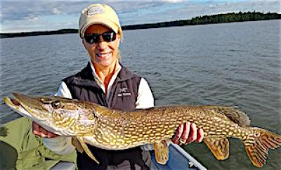 BIG Northern Pike Fishing Soft Plastics at Fireside Lodge in Canada