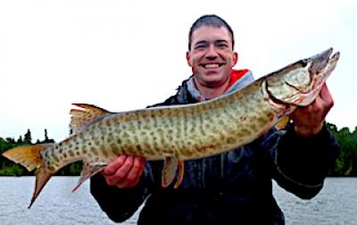 Many Muskie Caught Fishing at Fireside Lodge in Canada