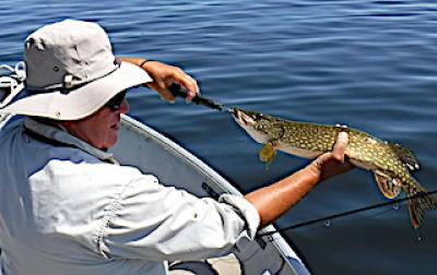 6 People 100-Plus Northern Pike Fly Fishing at Fireside Lodge in Canada