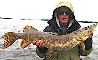 Many Big Northern Pike by Don Foley Fishing at Fireside Lodge