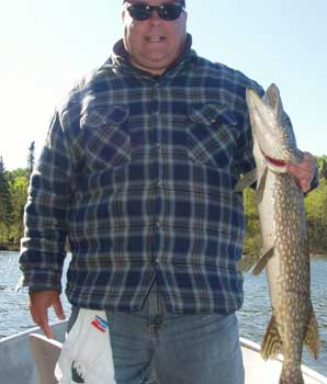 many northern pike over 30inches in canada