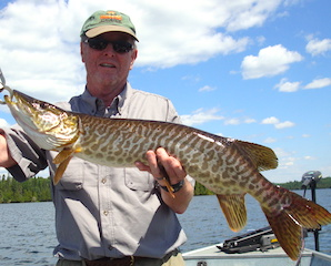 Nice Muskie Fishing by Jerry at Fireside Lodge in Canada