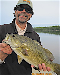 Bill with 1 of 37 Trophy Smallmouth Bass in 4 Days Fishing at Fireside Lodge landing an 18