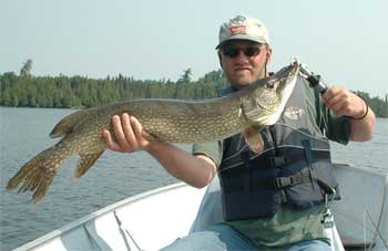 northern pike are big at canada lodges