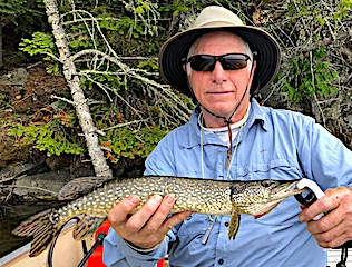 Robert Catching Over 30 Northern Pike in 1 Day Fly Fishing at Fireside Lodge in Canada