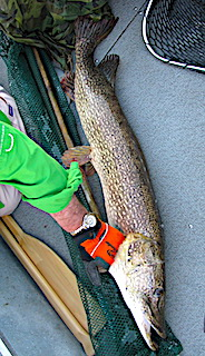 Dan Measuring His Trophy Northern Pike against a 48-inch Fireside Lodge Fish Cradle