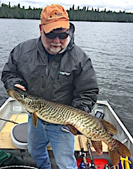 NICE BIG Tiger Muskie Fishing by Lloyd Morton at Fireside Lodge in Canada