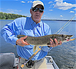 Fly Fishing Northern Pike is Super Fun by Doug