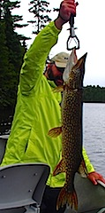 BIG Northern Pike are common Fishing at Fireside Lodge Canada