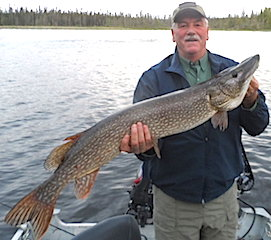 44-inch Trophy Northern Pike Fishing at Fireside Lodge by Jim