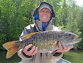 Lot of BIG Trophy Smallmouth Bass Fishing by Ollie at Fireside Lodge in Canada