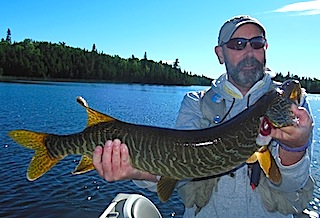 Tiger Musky Fishing By Doug Marks at Fireside Lodge Canada