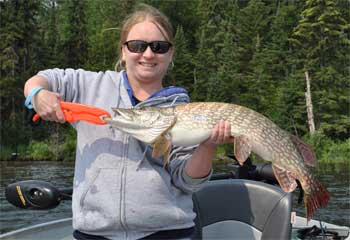 Large Northern Pike are Fun to catch Fishing in Canada