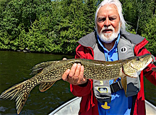 Plentiful Northern Pike Fishing at Fireside Lodge by Larry