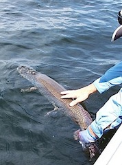 Trophy Catch and Release Fishing at Fireside Lodge Canada