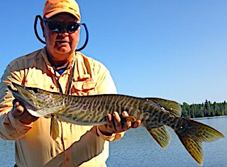 Tiger Muskie Fishing by Bll at Fireside Lodge in Canada