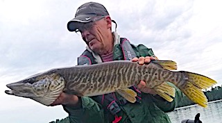 First Muskie Ever a Tiger Muskie by Jerry Fishing at Fireside Lodge in Canada