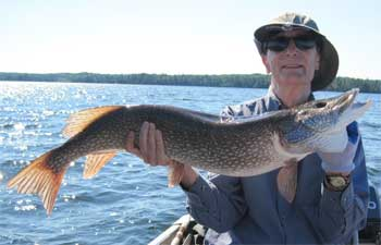 big northern pike trophies fishing in canada