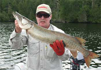 musky fishing for trophies in canada