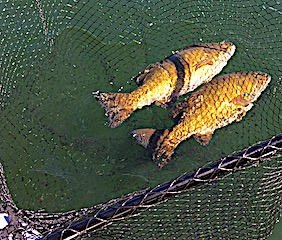 Trophy Doubles on Smallmouth Bass Fishing at Fireside Lodge in Canada by Bill and Jim