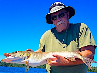 Catching Bigger Northern Pike are Great by Rick Fishing at Fireside Lodge in Canada