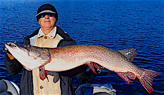 HUGE MONSTER Trophy Northern Pike Caught by Spencer Olson with an Ultra-Lite Rod and 3-inch Lure from Finland