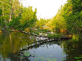 Trip Through Creek to Cedarbough Lake Fishing at Fireside Lodge