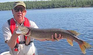 Jerry Miller with a 38-Inch Northern Pike Fishing at Fireside Lodge