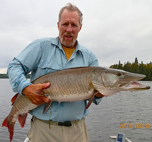Monster 46.5-inch Muskie Fishing at Fireside Lodge Canada by Bob