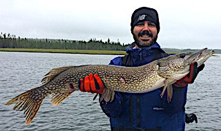 Large 38-inch Northern Pike Fishing at Fireside Lodge by Nick