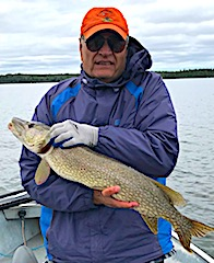 90 Northern Pike in 4 Days about this size Fishing by Wade at Fireside Lodge in Canada