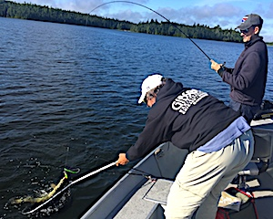 Action Shot Fishing BIG Northern Pike at Fireside Lodge by Chris and Donn