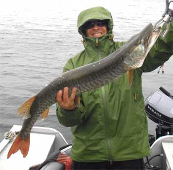 big first musky caught in canada fishing lodge