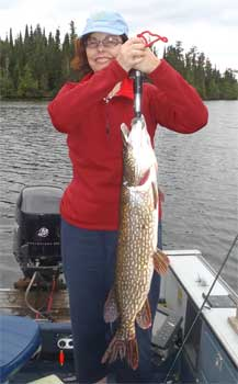 Fat 35-inch Northern Pike Fishing at Fireside Lodge Canada