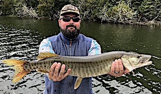 One of Two Muskie in One Day Fishing by Bill at Fireside Lodge in Canada