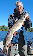 Several Trophy Northern Pike in one Trip Fishing at Fireside Lodge