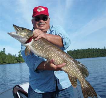 northern pike girth