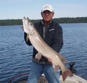 northern pike ontario